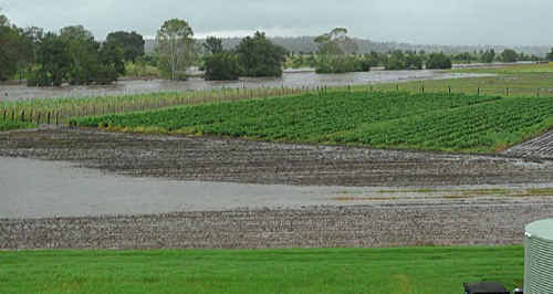 3.16pm: Water begins to encroach on the property. The water tank in the bottom right of the photo is in full view.