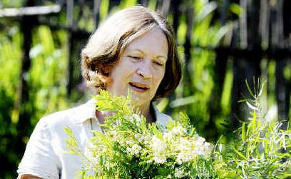 Govt overkill: Permaculture College Australia principal Robyn Francis holds some of the many varieties of wattle/acacia plants.