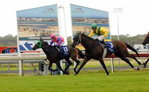 Jockey Davin Green takes Joyeux Joy (3) on to win in yesterday's Austral Masonry Handicap (class 4) at Corbould Park.