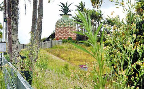 Once the Sunshine Coast's biggest tourist attraction, this is how the Big Pineapple looks today.