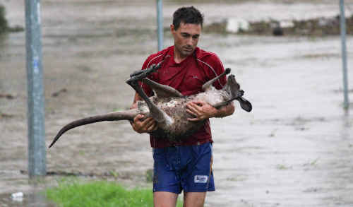 HERO'S HEARTACHE: Ray Cole, who rescued a drowning kangaroo from the swollen Bremer River at the One Mile bridge during the floods, has moved to Jimboomba after his Ipswich home was broken into and trashed. Photo: Nick DeVilliers KANG21A