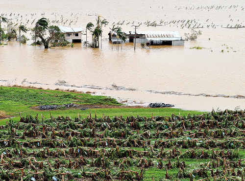 YASI STRIKES: A banana plantation is destroyed outside of Innisfail. AAP Image
