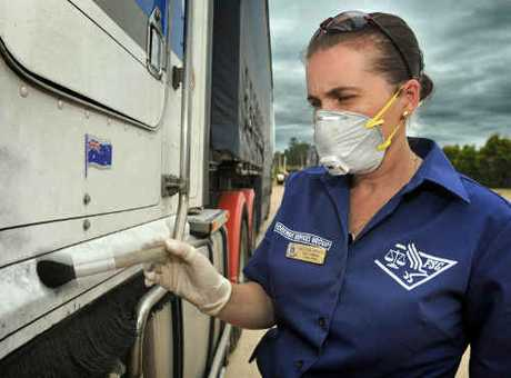 Victoria Brooker dusts for fingerprints on a Daniel and Son Road Transport Kenworth prime mover that had its front wheels stolen over the weekend. The truck was stored in the Grafton Truck and Trailer Repairs fenced off yard at South Grafton.