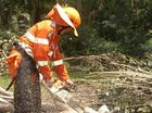 State Emergency Service Midge Point deputy group leader Remo Sturma chainsaws through a tree knocked down during Cyclone Yasi.