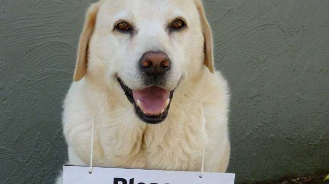 Bundy of Coffs Harbour is hoping people will help the Queensland animal flood victims.