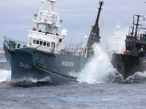 Home stretch in Australian action against Japanese whaling