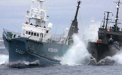 Anti-whaling group Sea Shepherd's ship the Bob Barker (right) and the Japanese whaling ship Yushin Maru No.3 collide in the waters of Antarctica in February 2010.