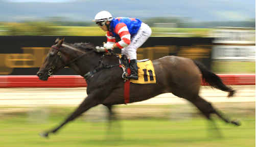 Miss Minardi wins the Fillies and Mares Maiden plate at the Murwillumbah Races.