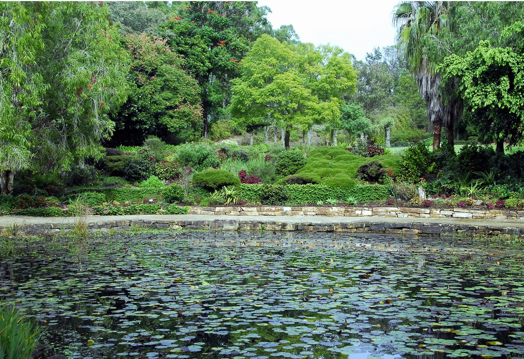 A stunning image of Noosa Botanic Gardens, a veritable sanctuary from modern life and a place that's well worth a visit.