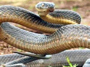 Snake bite victim dies