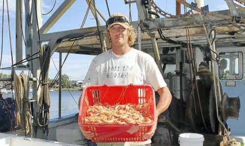L Margo deckhand Joel Towner with some premium ocean school prawns caught off Iluka yesterday.