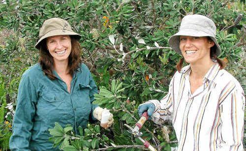 Karla Gillies and Karina Rothacker having fun at their Serenity Landcare site.