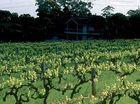 Barossa a wine lover's paradise