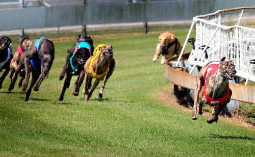 Madam Pedrille sprints away to win the third at Border Park Raceway on Saturday.
