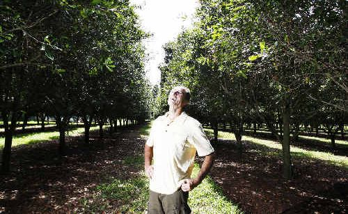 Macadamia nut farmer Greg Smith inspects the crop on his farm at Brooklet. Despite volatility in the industry he expects its value will double over the next four years, making it worth $70 million by 2012.