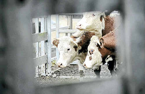 Damage to Japanese food production areas is expected to increase demands for imports such as beef.
