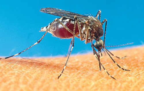 A perfect season has meant an increase in cases of mosquito-borne diseases.