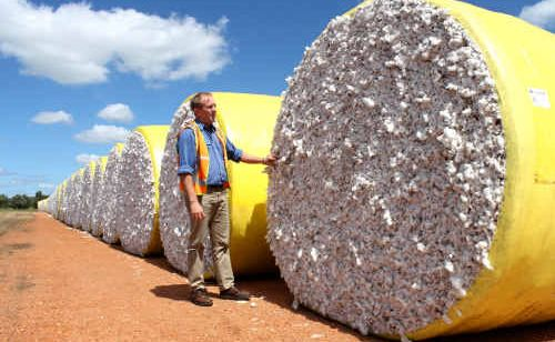 Queensland Cotton's Rick Jones inspects one of the few cotton bales at the Emerald Gin site.