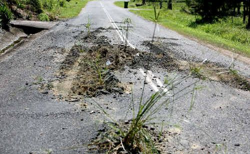 Palm Ridge Rd, off Holts Road northwest of the city, has been decorated with plants as the road surface has started to crumble.