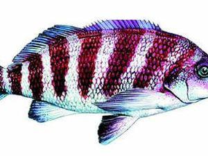 Global warming affecting fish