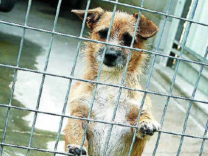 More than 300 dogs and cats were destroyed at the Rockhampton Animal Pound in March.