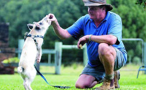 Yandina farmer Ed van Bergen with six-month old pet pig Wilbur who is a beloved member of the household.