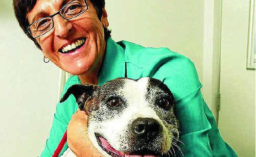 Dr Geeta Saini regularly checks the teeth and gums of five-year-old staffy, Millie.