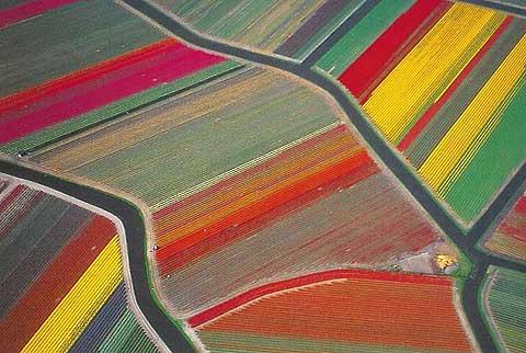 Hollands Bloomin Tulip Festival Queensland Times - Holland tulip festival