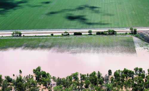 Cotton Australia said losses in the Central Highlands and Dawson Valley are estimated to be 45% of the pre-flood predictions.