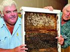 Invading bees threaten industry