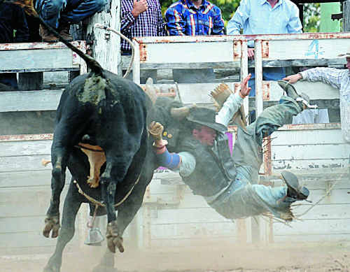 The Channel 7 Championship Rodeo bucks into action from 1pm at the Gympie Show.