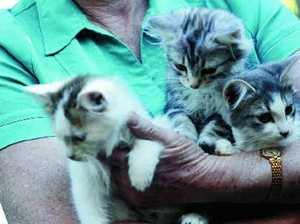 Low-lifes still dumping animals