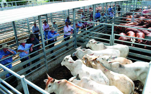 A lack of good quality cattle in the region means The prime cattle section will not run at the 2011 Emerald Show.