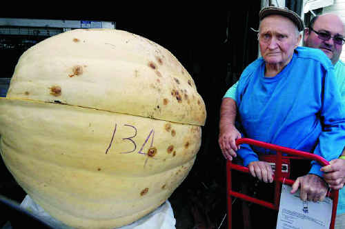 """Yangan's Halvor """"H2O"""" Guy and his son Vincent with his monster of a pumpkin, weighed on Sunday at 134kg."""