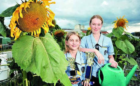 Nambour students Courtney Bellgrove, left, and Naomi Hurrey helped to grow the state's biggest sunflower.