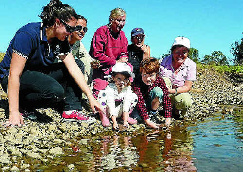 University of Queensland researcher Mariana Campbell and Tiaro Landcare volunteers release young turtles carrying tiny transmitters on their backs into the Mary River.