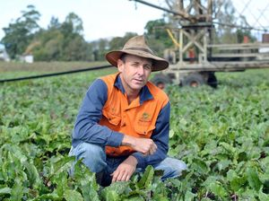Light at the end of the tunnel for Lockyer beetroot farmers