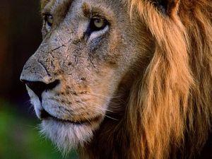 Lion attack prompts safari warning