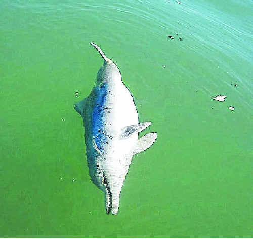 Dr Scott McCauley encountered the dead dolphin.