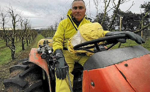 Heavenly Valley Farm manager Rick Dalli practices responsible spraying on the Bangalow farm.