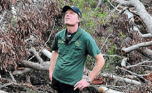 Murray Chambers, of Sunshine Coast Koala Rescue, was disgusted with tree clearing of koala habitat at Peregian.