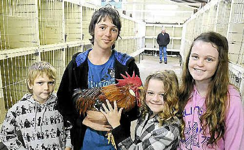 Seventeen-year-old Josh Bray, of Tyalgum, holds the rooster he bought at the auction he attended with brother Will, 9, and sisters Jessica, 8, and Hannah, 15.