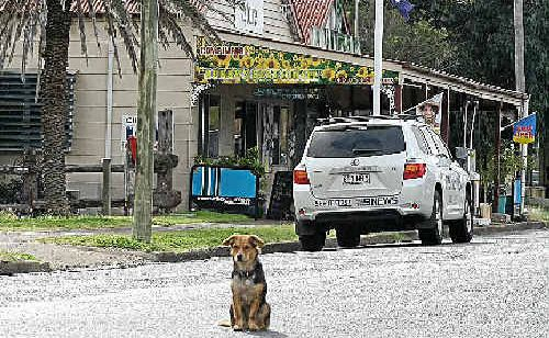 A regular to the Nobby General Store, dog 'Pumpkin', sits outside the store, where the shooting happened on Sunday.