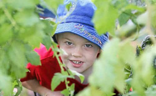 Three-year-old Kaden Slater says he like tending to the veggie garden at Le Smileys Early Learning Centre along with the other children and teachers (inset).