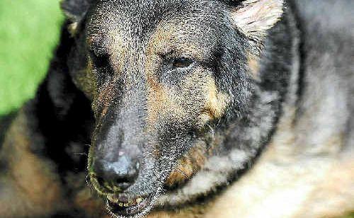 A new kennel seeks permission to breed german shepherds.