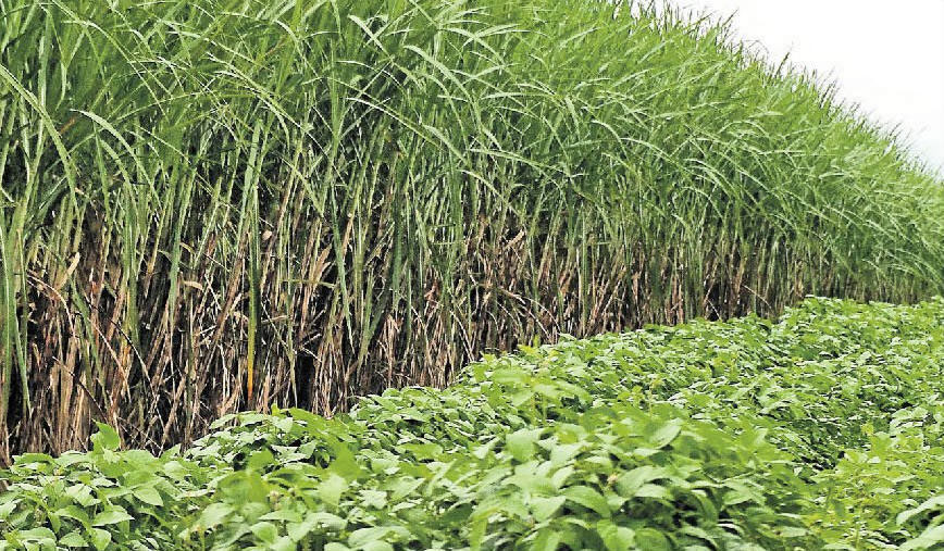 Canegrowers say these awards were a first for the sugarcane industry, and very different from the locally run productivity awards.