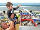 Four-year-old was on hand to load the catch of mullet at Wurtulla Beach yesterday. Fisherman collected some 20 tonnes of fish, the best season for a few years.