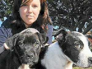Six puppies dumped on road