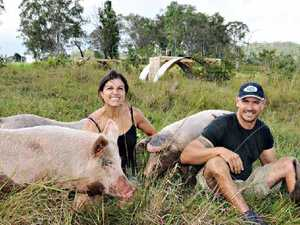 Red tape snuffs out piggery hopes