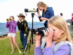 Headland awash with whale watchers